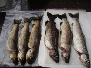 2.WildRainbow&BrownTrout.population.healthy